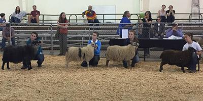2021  Black Sheep Gathering - CANCELLED